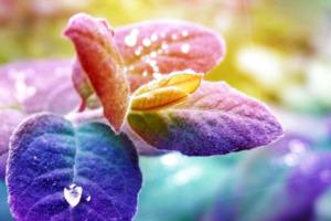 Atem der Seele - Zeit für Dich