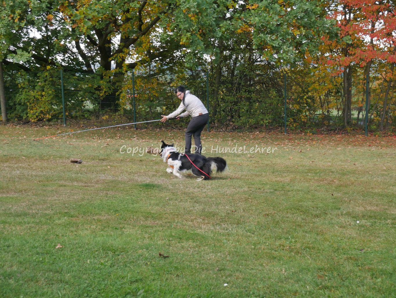 Maria Saring beim Apport mit ihren Hunden