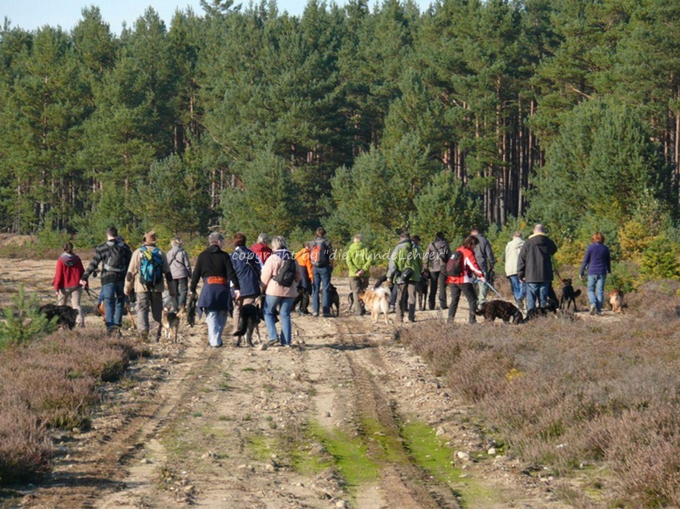 Hundewanderung durch ein Waldgebiet