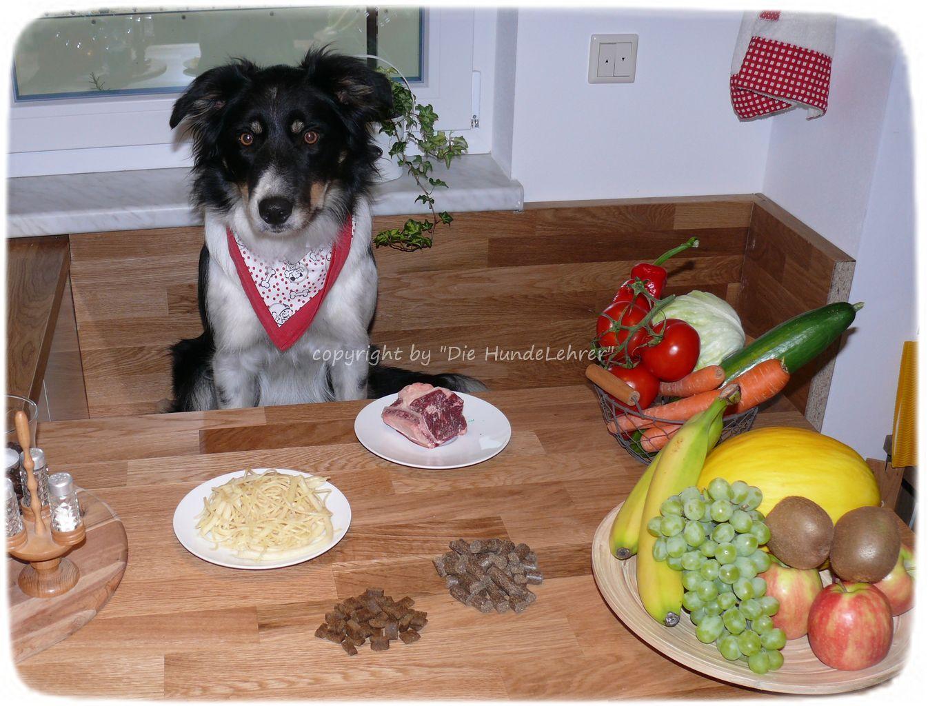 Hund sitzt am Tisch vor Futter