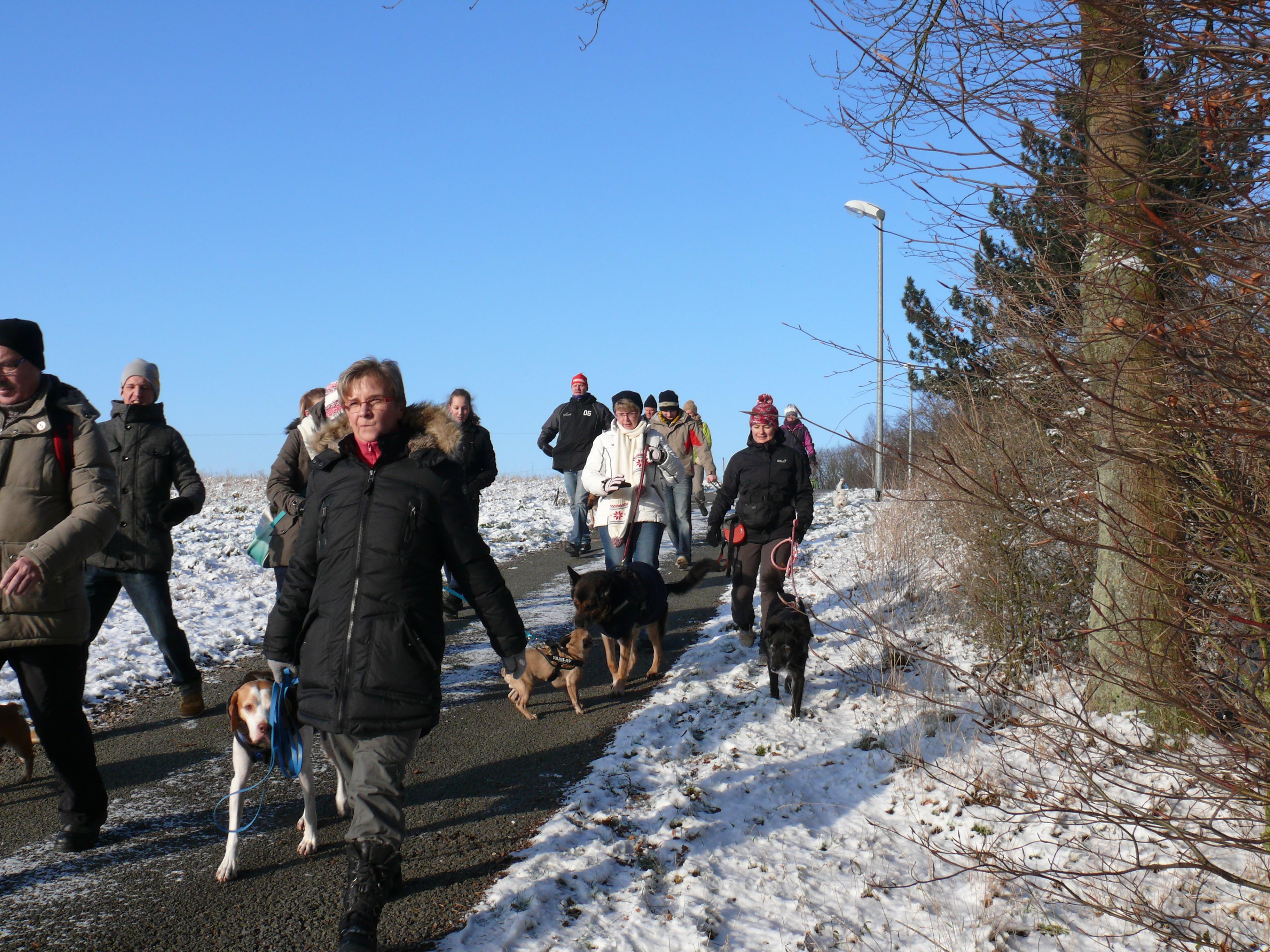 Winterwanderung mit Hunden
