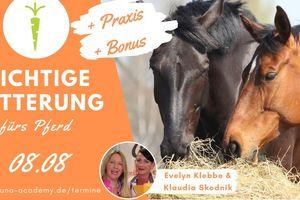 Ernährungsberatung Pferd - Das richtige Futter fürs Pferd
