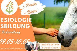 Kinesiologie Ausbildung Pferd und Hund