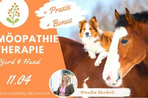 Homöopathie - praktische Anwendung für  Pferd und Hund