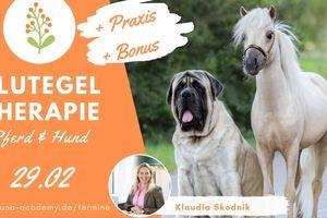 Blutegel Therapie Pferd und Hund