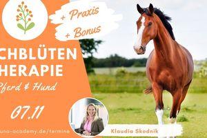 Bachblüten Therapie Pferd und Hund