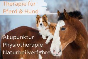 Behandlung Pferd & Hund