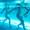 AF66 Aqua-Fitness Mo 17.30-18.15