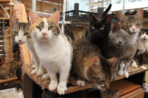 Keeping cats in a shelter, keeping cats in groups, quality of life