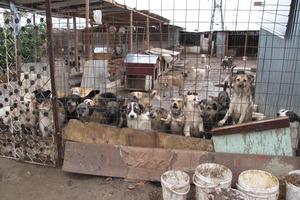 Webinar - Ein Hund aus dem Ausland - Tierschutz oder nicht?