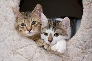 Katzenverhalten - Gruppenverhalten