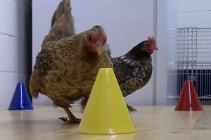 Webinar Training für das Tierwohl