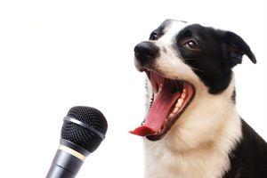 Medientraining für Tierschützerinnen