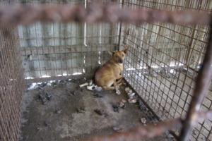 IWB Veterinärmedizinisches Tierschutz-Fachwissen