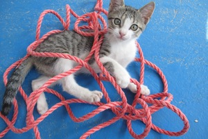 Cats - Basics, expressive behavior, socialisation, habituation