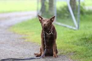 Basic Introduction To Animal Training