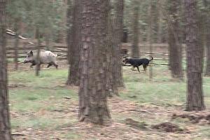 Webinar Anti-Jagd-Training