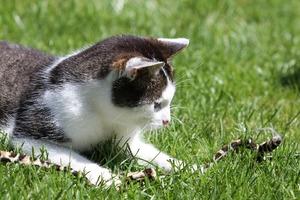 Beschäftigungstraining für Katzen