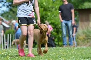 Kids and dogs Kurs von 11-15 Jahren. Buchung nur über den Freiburger Ferienpass