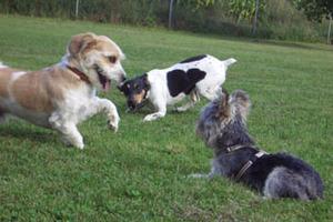 Kleinhundegruppe