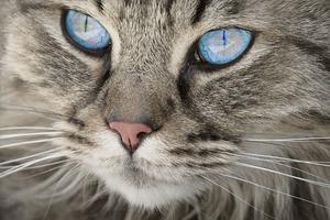 Verhaltensberatung für Katzen