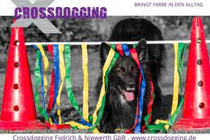 Crossdogging ab 12 Jahren