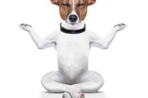 Impulskontrolle I Wie Hunde sich beherrschen lernen