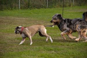 für große und kräftige Hunde
