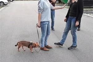 Schutz und Sicherheit für Hund und Halter