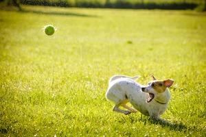 Hyperaktiver und wilder Hund, was tun...