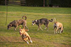 Freilaufgruppe für Junghunde und mittelgroße Hunde