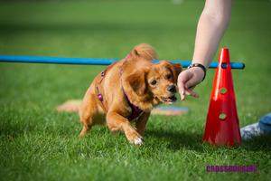 Einsteigerkurs Crossdogging ab 12 Jahren