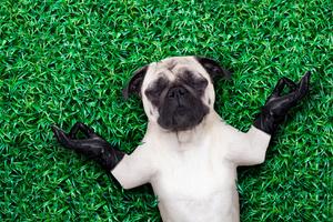 Der Hund als Lehrer für Entschleunigung und Achtsamkeit