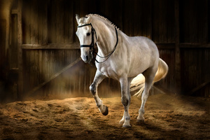 Training für Pferde