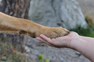 Mit Hund im Zoogeschäft