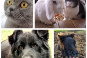 Basismodul Systemische Tierkommunikation