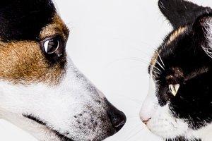 Aufbaumodul Systemische Tierkommunikation