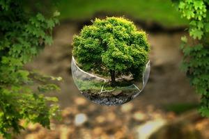 B.N.T. Balancieren von Nährstoffen und Toxinen