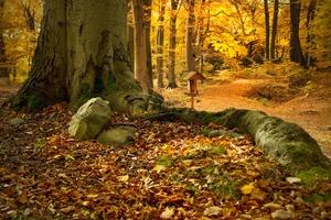 Herbstcamp Prebelow