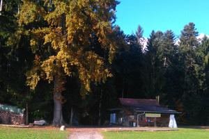 Wald-Erlebnistag
