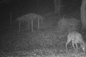 Wildtiere in der Nacht