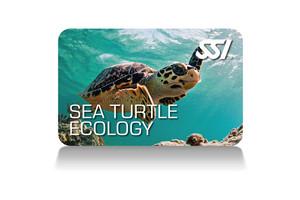 Sea Turtle Ecology Programm