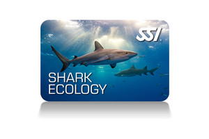 Shark Ecology Programm