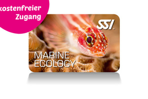 Marine Ecology Programm