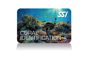 Coral Identification Programm