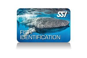 Fish Identification Programm