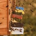 Bienenlehrpfad und gemeinsames Grillen