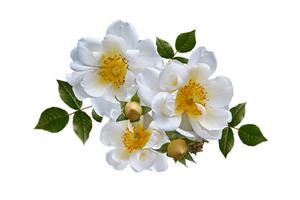 23.9. Gartentherapie - Ein Garten soll den Menschen helfen, sich wohl zu fühlen!