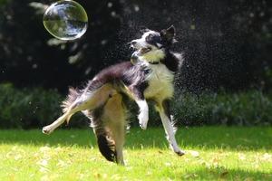 Doggythek Sport + Beschäftigung