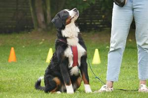 CLICK + TRAIN - 1 zu 1 Training für Dich und Deinen Hund